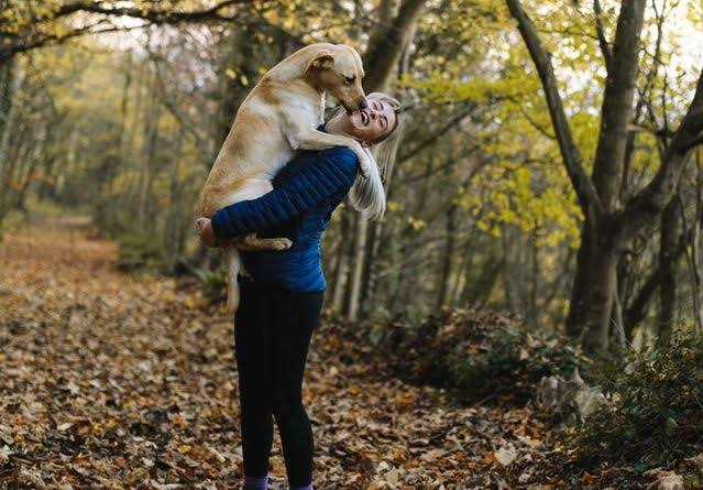 CBD For Dogs, CBD For Dogs