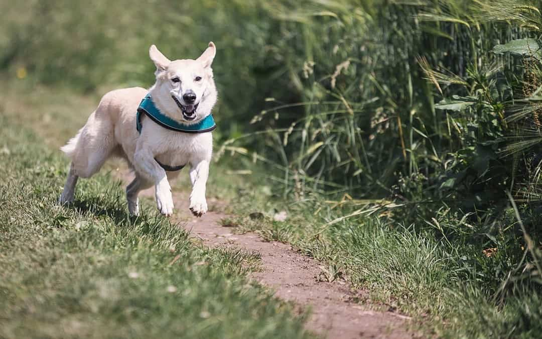 CBD For Dogs: What Do You Need To Know